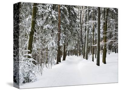 Winter Landscape, Near Koenigsfeld, Black Forest, Baden-Wutttemberg, Germany, Europe