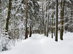 Winter Landscape, Near Koenigsfeld, Black Forest, Baden-Wutttemberg, Germany, Europe by Jochen Schlenker