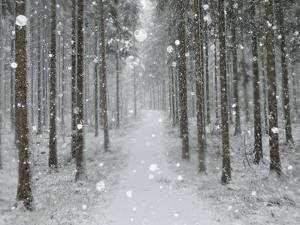 Winter Landscape, Near Villingen-Schwenningen, Black Forest, Baden-Wurttemberg, Germany, Europe by Jochen Schlenker