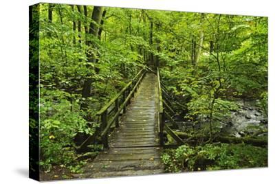 Wooden Bridge, Holzbachtal, Westerwald, Rhineland-Palatinate, Germany, Europe