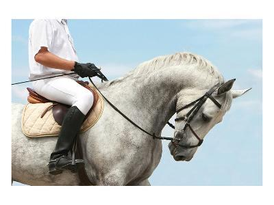 Jockey Riding Dressage Horse--Art Print