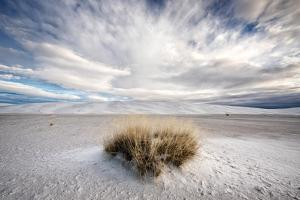 A Grass Mound in a Barren Desert in USA by Jody Miller
