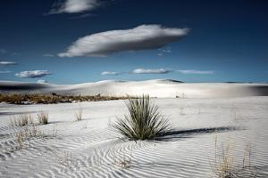 Desert Scene in USA by Jody Miller