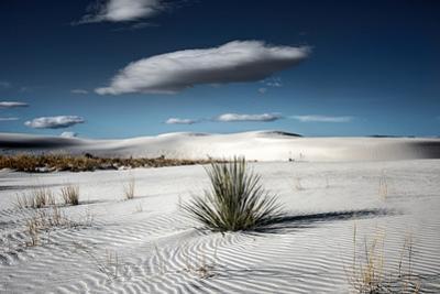 Desert Scene in USA