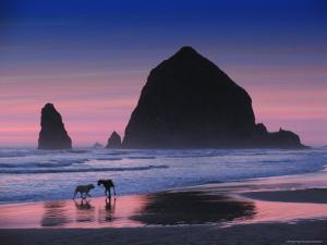 Dogs on Cannon Beach by Jody Miller