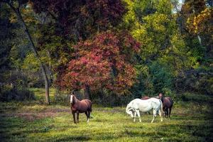 Horses in a Field at Fall in USA by Jody Miller