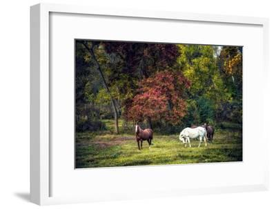 Horses in a Field at Fall in USA