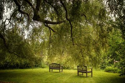 Rural Scene with Garden Benches under a Large Willow Tree