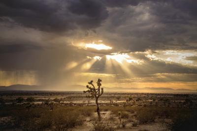 Sunlight on Desert Landscape in USA