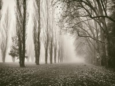 Trees in Fog IV