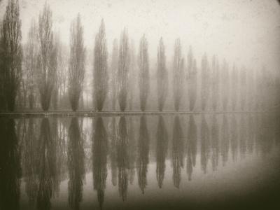 Trees in Fog V