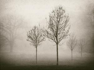 Trees in Fog VII by Jody Stuart