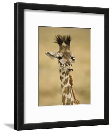 Masai Giraffe, Masai Mara Game Reserve, Kenya