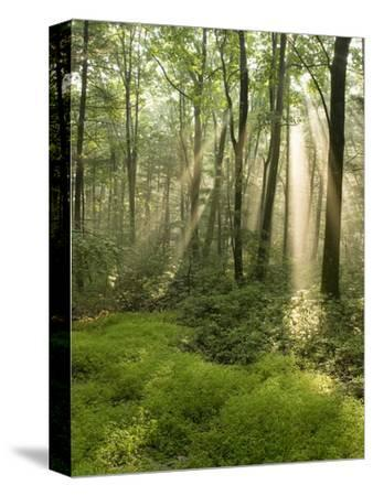 Deciduous Forest with Rays of Sunlight, Bald Eagle State Park, Pennsylvania, USA