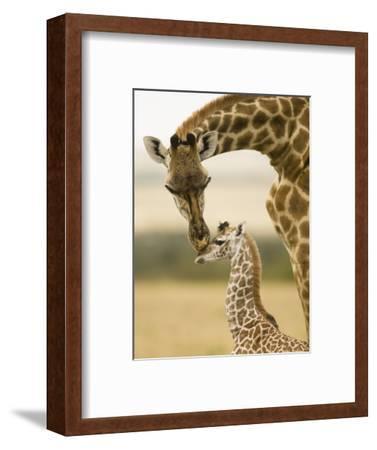 Female Masai Giraffe with Young
