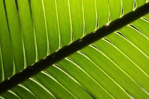 Close Up of a Palm Frond by Joe Petersburger