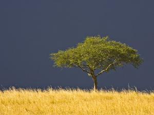 A Scenic View of The Mara, Maasai Mara, Kenya by Joe Restuccia III