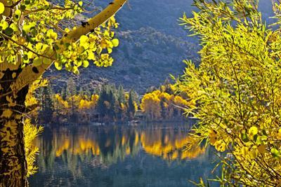 Autumn Colors of the June Lake Loop, California, USA by Joe Restuccia III