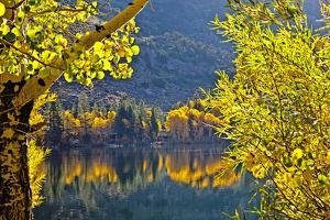 Autumn Colors of the June Lake Loop, California, USA by Joe Restuccia III