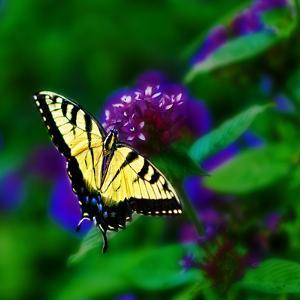Bellingrath Gardens in Theodore, Alabama, USA by Joe Restuccia III