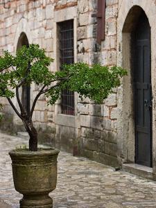 Courtyard of Topkapi Palace, Istanbul, Turkey by Joe Restuccia III