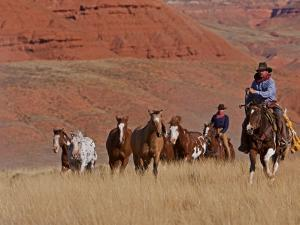 Cowboys Herding Horses in the Big Horn Mountains, Shell, Wyoming, USA by Joe Restuccia III