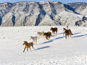 Cowboys With Horses, Hideout Ranch, Shell, Wyoming, USA by Joe Restuccia III