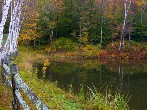 Fall Colors in the Galton Pond, Gralton, Vermont, USA by Joe Restuccia III