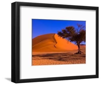 Flourishing Tree with Soussevlei Sand Dune, Namibia