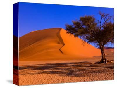 Flourishing Tree with Soussevlei Sand Dune, Namibia