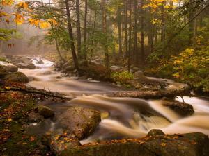 Flowing Streams Along the Appalachian Trail, East Arlington, Vermont, USA by Joe Restuccia III