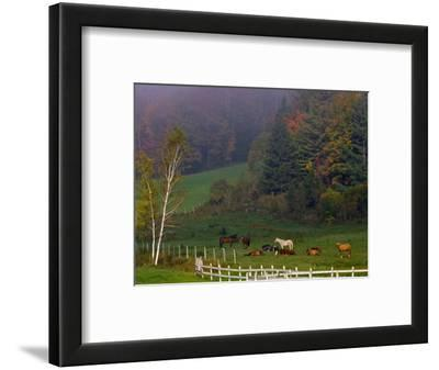 Horses in Field, Near Grandville, Vermont, USA