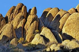 USA, Alabama Hills, California. Long Pine by Joe Restuccia III