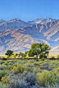 USA, Bishop, California. Eastern Sierra Region, Owens Valley by Joe Restuccia III
