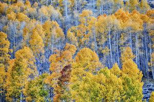 USA, Lee Vining, California. Conway Pass, Mono County. by Joe Restuccia III