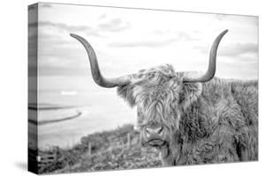 Highland Cows II by Joe Reynolds