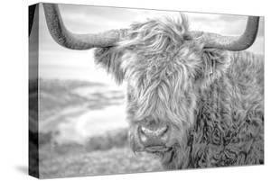 Highland Cows III by Joe Reynolds