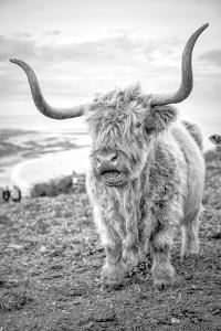 Highland Cows VI by Joe Reynolds