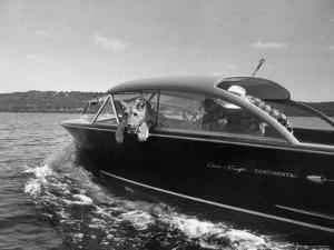 Blondie, the Pet Lion, Fascinated by the Water as She Takes Her First Ride in Chris Craft Motorboat by Joe Scherschel