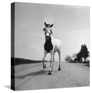 Jimmy the Horse Rollerskating Down Road in Front of Its Farm by Joe Scherschel