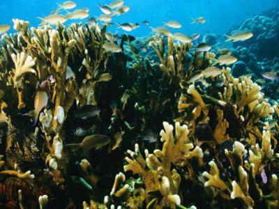 Coral Reef with Sea Life, Pacific Ocean