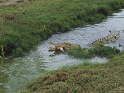 Saltwater Crocodile Farm, Queensland, Australia