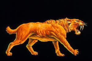 Artwork of a Sabre-toothed Cat (Smilodon Sp.) by Joe Tucciarone