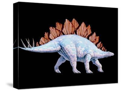 Artwork of Stegosaurus Dinosaur, Stegosaurus Sp.