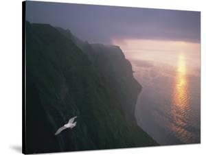 A Gull Soars Above Coastal Cliffs in Alaska by Joel Sartore