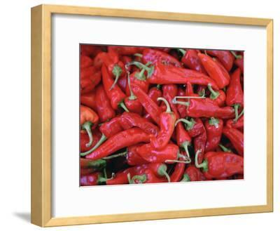 A Large Group of Bright Red Chili Peppers