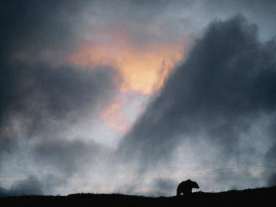 A Silhouetted Grizzly Bear Appears against a Twilight Sky