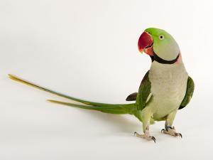 Beautiful Parakeet & Rosella Photography artwork for sale