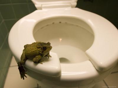An Eastern American Toad in a Motel Room Bathroom by Joel Sartore
