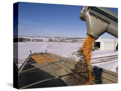 Corn Pours from an Auger into a Grain Truck